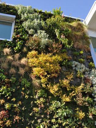 Végétalisez vos murs ! | Potager & Jardin | Scoop.it