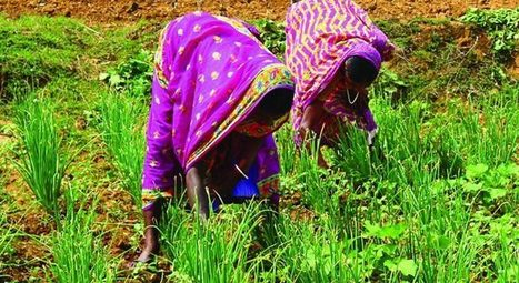 JHARKHAND, INDIA: Tata Steel providing access to sustainable livelihoods for SC/ST people | Selected News from SRI-Rice: April 2016 **sririce.org | Scoop.it