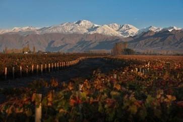 Argentina winemakers facing difficult 2014 vintage | Autour du vin | Scoop.it
