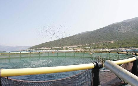 NY-based fund takes control of Andromeda fish farming   Aquaculture Directory   Aquaculture Directory   Scoop.it