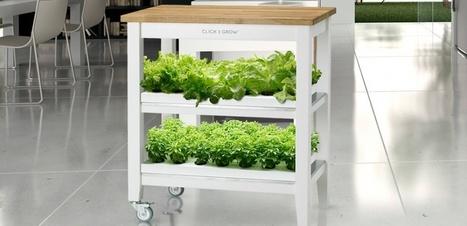 Faites pousser des fraises et des salades dans votre salon | Attitude BIO | Scoop.it