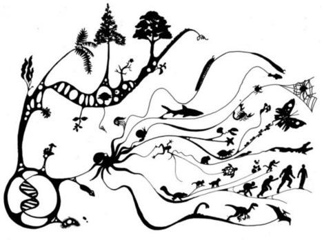 Survie du plus apte : l'évolution n'a pas que la compétition comme seul moteur | Aux origines | Scoop.it