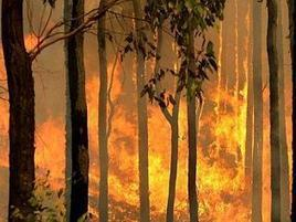 Residents are urged to prepare for fire season. Source: NewsComAu - Herald Sun | Fire prevention with grasses | Scoop.it