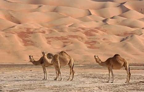 Middle East Respiratory Syndrome (MERS): A Primer | MERS-CoV | Scoop.it