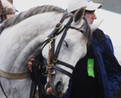 Horses Never Forget Human Friends : Discovery News