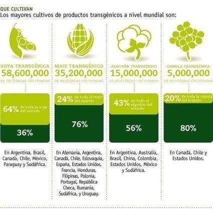Los transgénicos no son la solución al hambre mundial | ECOagricultor | Stop Monsanto | Scoop.it