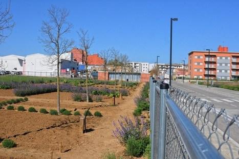 Figueres adjudica els horts urbans del barri de la Marca de l'Ham | Empordà | Scoop.it