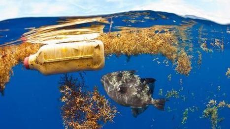 Ocean 2050: How to sustain our biggest ecosystem   ecosystem   Scoop.it