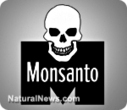The GMO debate is over; GM crops must be immediately outlawed; Monsanto halted from threatening humanity | promienie | Scoop.it
