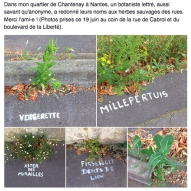 A Nantes, une mystérieuse graffeuse nomme les plantes des rues | #Langues, #cultures, #Culture organisationnelle,  #Sémiotique,#Cross media, #Cross Cultural, # Relations interculturelles, # Web Design | Scoop.it