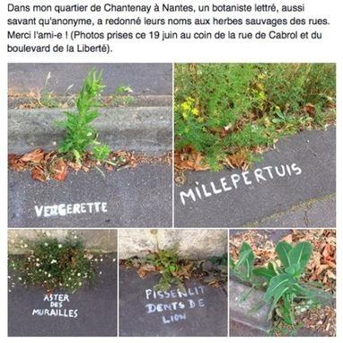 A Nantes, une mystérieuse graffeuse nomme les plantes des rues | Actu de l'Aménagement Urbain | Scoop.it