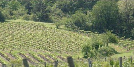 La France, premier exportateur mondial en 2014 | Agriculture en Dordogne | Scoop.it