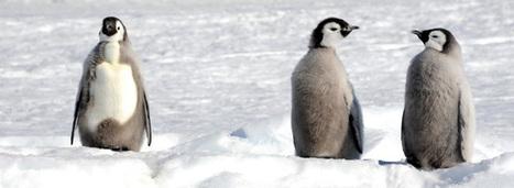 Un tiers des espèces en danger dans les Terres australes et antarctiques #TAAF | Hurtigruten Arctique Antarctique | Scoop.it
