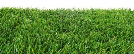Zoysia Grass Florida | Zoysia Grass Plugs Review | Scoop.it
