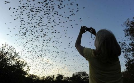 Coalition builds deal to buy, preserve 1500 acres near famed bat cave - San Antonio Express-News | Bat Biology and Ecology | Scoop.it
