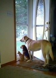Why Door For Pet Are Essential And Convenient | Pet Doors | Scoop.it