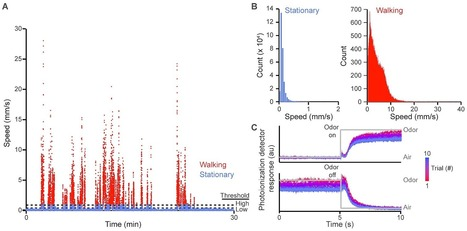 Fluctuation-Driven Neural Dynamics Reproduce  Drosophila  Locomotor Patterns | Social Neuroscience Advances | Scoop.it