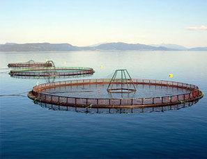 FIS - Worldnews - Cooke Aquaculture becomes first salmon producer to obtain new BAP certification | Nova Scotia Fishing | Scoop.it