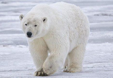 Lancement de la deuxième édition de l'Arctic Yearbook - 45eNord.ca | ARTIC | Scoop.it