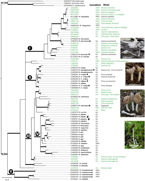 Solving the ecological puzzle of mycorrhizal associations using data from annotated collections and environmental samples | Biologie Intégrative | Scoop.it