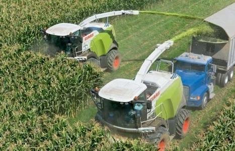 Argentina: Cómo elegir el maiz para silo | Maíz | Scoop.it