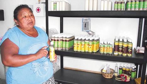 Escasean productores de miel de abeja melipona | Miel Melipona | Scoop.it