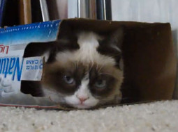 """Video: Grumpy Cat - """"I'll be in my box!"""" - Socks On An Octopus 