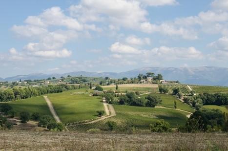 The Wines of Umbria | Italia Mia | Scoop.it