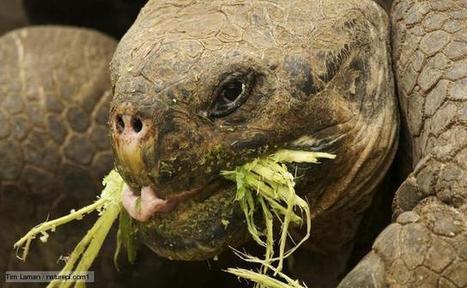 BBC Nature - Herbivorous videos, news and facts | Carnivores, herbivores and omnivores | Scoop.it