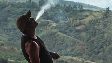 Kings of Cannabis - Trailer | VICE United States | SgurdNoRawEht | Scoop.it