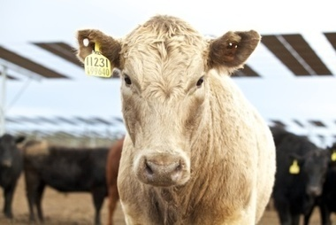 Animal Welfare & Ethical Farming | Animal Health and Welfare | Scoop.it