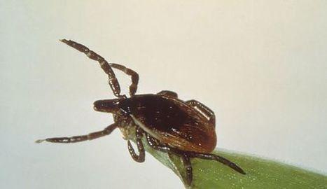 Lyme. Procédure civile contre les laboratoires pharmaceutiques : plainte de 200 malades   EntomoNews   Scoop.it