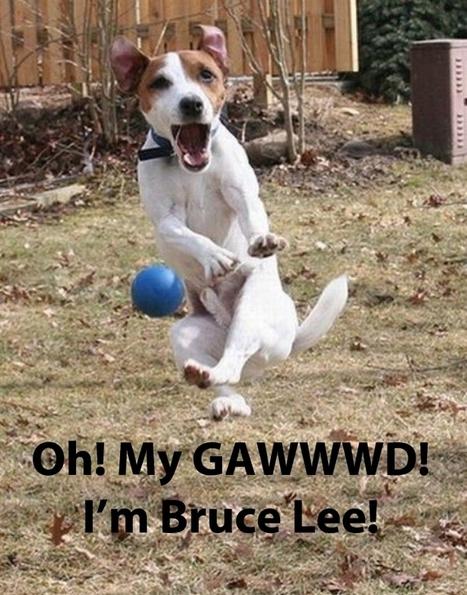 Top 10 Funny Pet Memes and BONUS | TOP10 | Jacob gadget | Scoop.it
