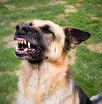 Dog Bite Lawyer Atlanta, Georgia | Attorneys Recommended | Scoop.it