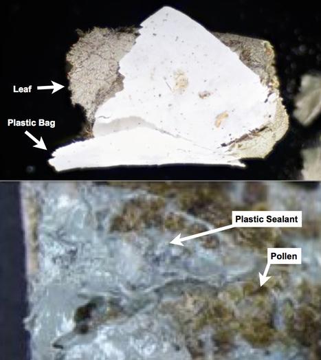 Deux espèces d'abeilles solitaires utilisent du plastique pour construire leur nid en ville | EntomoNews | Scoop.it