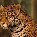 Amazon Rainforest Remains Protected Despite Development : News & Alerts | Brazil Things to Do | Conservation, Ecology, Environment and Green News | Scoop.it