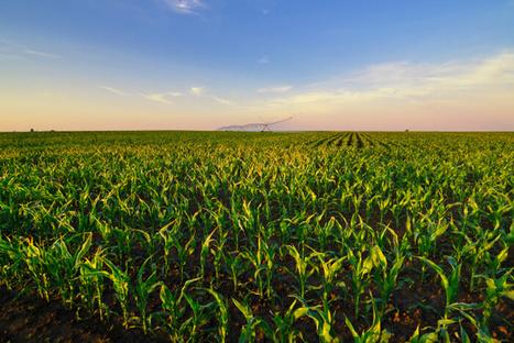 Bioenergie: Auf dem Weg in die Maiswüste? | Agrarforschung | Scoop.it