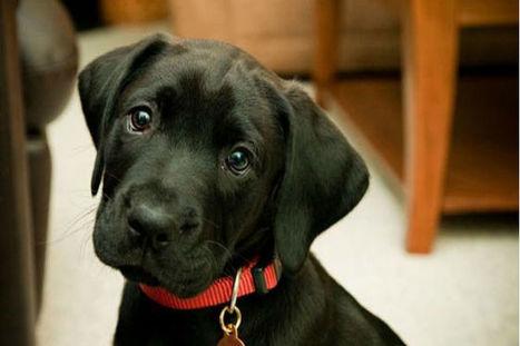Sindrome del cane nero. Non si giudica un cane dal suo colore | My Pet's Hero | Scoop.it