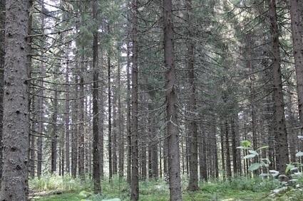 Ilmastonmuutos ja metsät – uutta tutkimustietoa   Ilmastotieto   Tutkimustiedon käyttö päätöksenteossa   Scoop.it