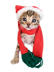 ASPCA | Holiday Safety Tips | Pet Topics and News | Scoop.it