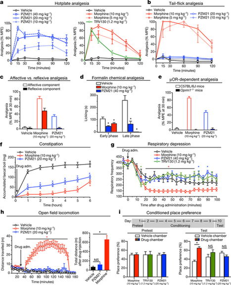 Structure-based discovery of opioid analgesics with reduced side effects : Nature : Nature Research | Bioinformatics, Comparative Genomics and Molecular Evolution | Scoop.it