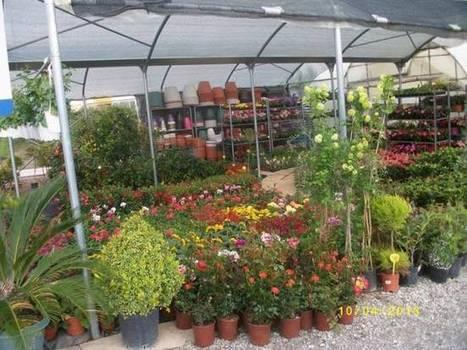 Το μεγαλύτερο φυτώριο με τριανταφυλλιές στην Ελλάδα μετρά τρεις ... - NewsBomb | Γεωπονικά | Scoop.it