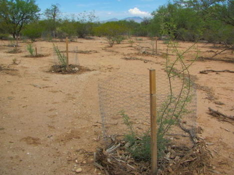New plants taking hold at urban wildlife sanctuary | Arizona Daily Star | CALS in the News | Scoop.it
