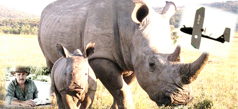 A Look at One Anti-Poaching Strategy that is Working | What's Happening to Africa's Rhino? | Scoop.it