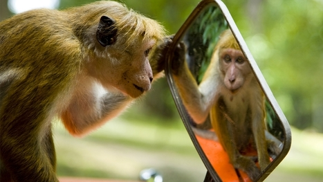 Which Animals Recognize Themselves In Mirrors? | Navigate | Scoop.it