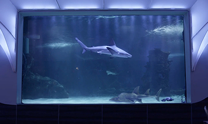 Newport Aquarium's Rare Sharks Benefit from Continuous Water Quality Monitoring | Aquaculture | Scoop.it