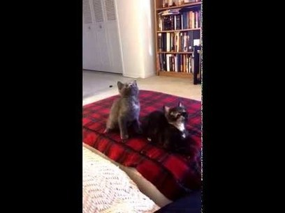 Kitten Jam - Turn Down For What (adorable kittens dancing) | First Topic | Scoop.it
