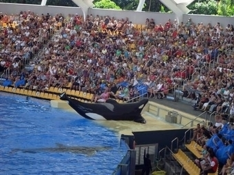 #BlackFish reviewed - WeHo News ~ #Captivity , so wrong for #Sentients ~ | Rescue our Ocean's & it's species from Man's Pollution! | Scoop.it