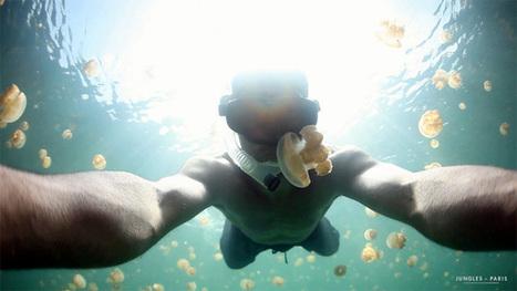 A swim through Jellyfish Lake, Palau – video | GMOs & FOOD, WATER & SOIL MATTERS | Scoop.it