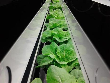NEWS: Vertical Designs Ltd. Strikes Deal for Province of Ontario | Vertical Farm - Food Factory | Scoop.it